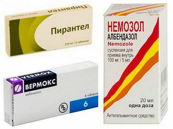 Акарицидные препараты от клещей – классификация и особенности применения