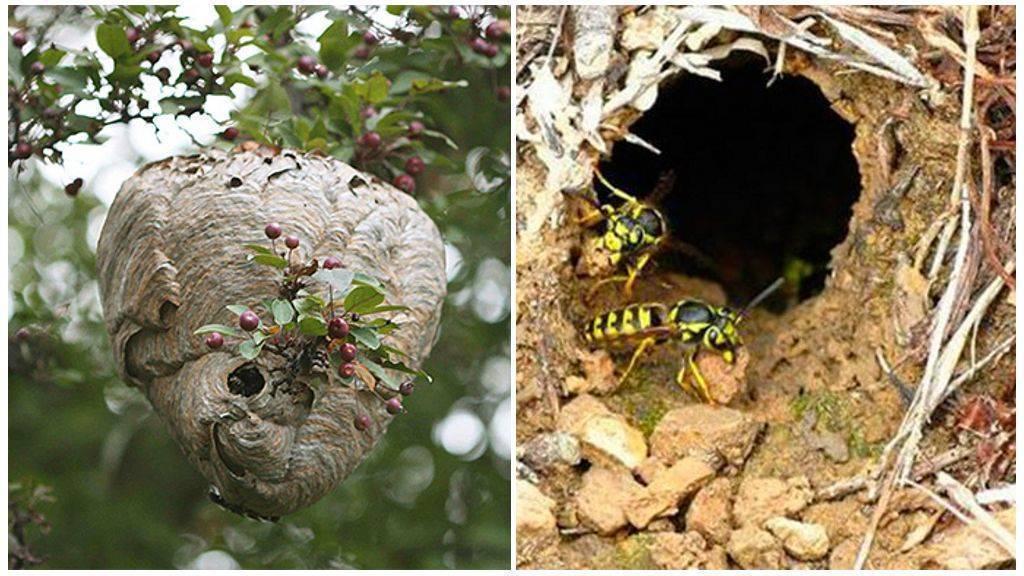 Уничтожение осиного гнезда в труднодоступном месте