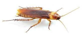 Как избавиться от тараканов в квартире и доме: способы борьбы
