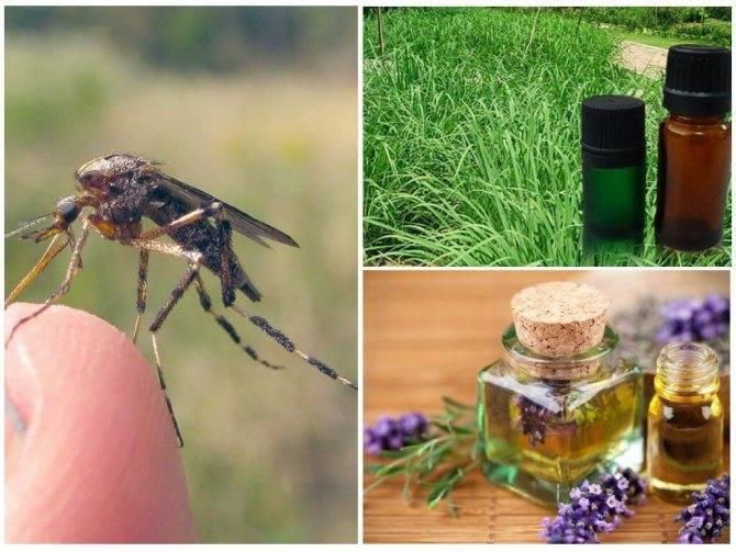 Делаем безопасный спрей от комаров: мастер-класс