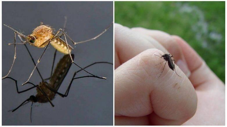 В этому году особенно много комаров? из-за карантина? объясняет энтомолог роман хряпин
