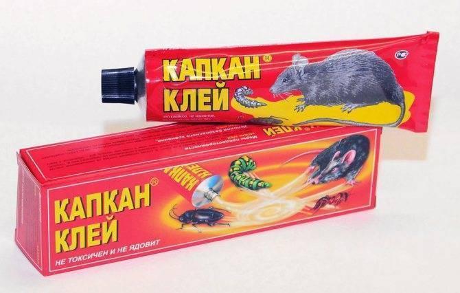 Как эффективно бороться с крысами в частном доме