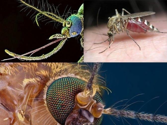 Откуда берутся комары: интересные факты о их жизни