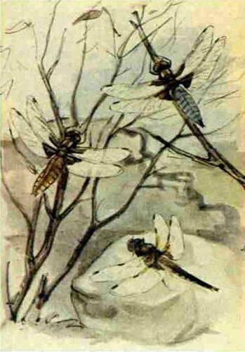 Марк моффет муравьи и искусство войны