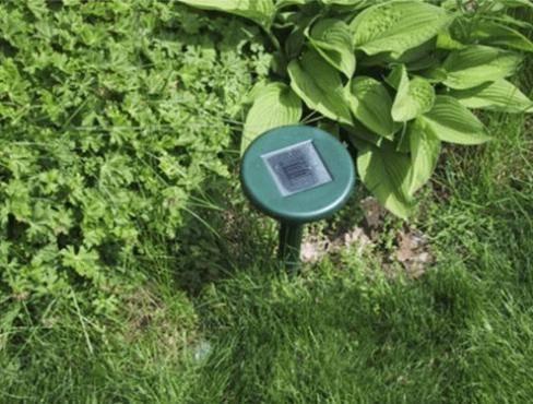 Как быстро избавиться от кротов в огороде— эффективные методы и народные средства