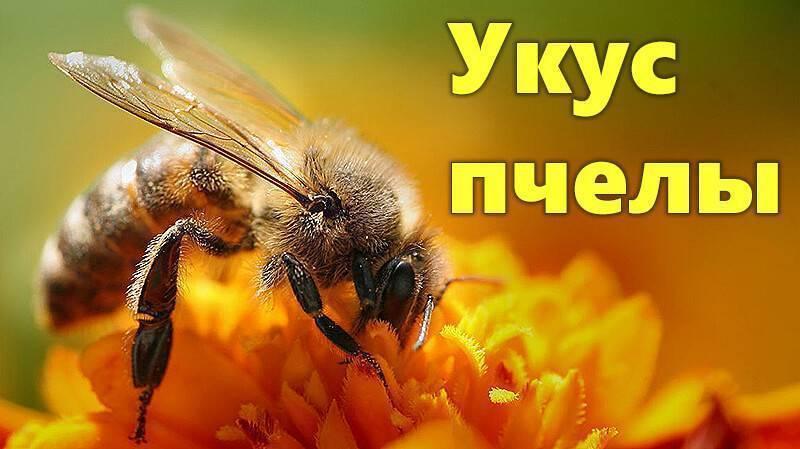 Правила первой помощи при укусе пчелы