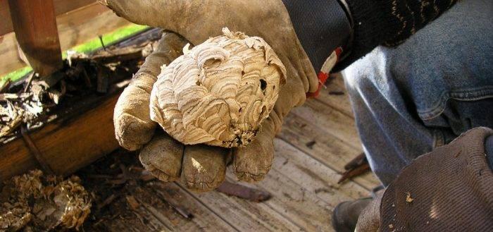 Рабочие способы, как избавиться от ос в доме и на участке