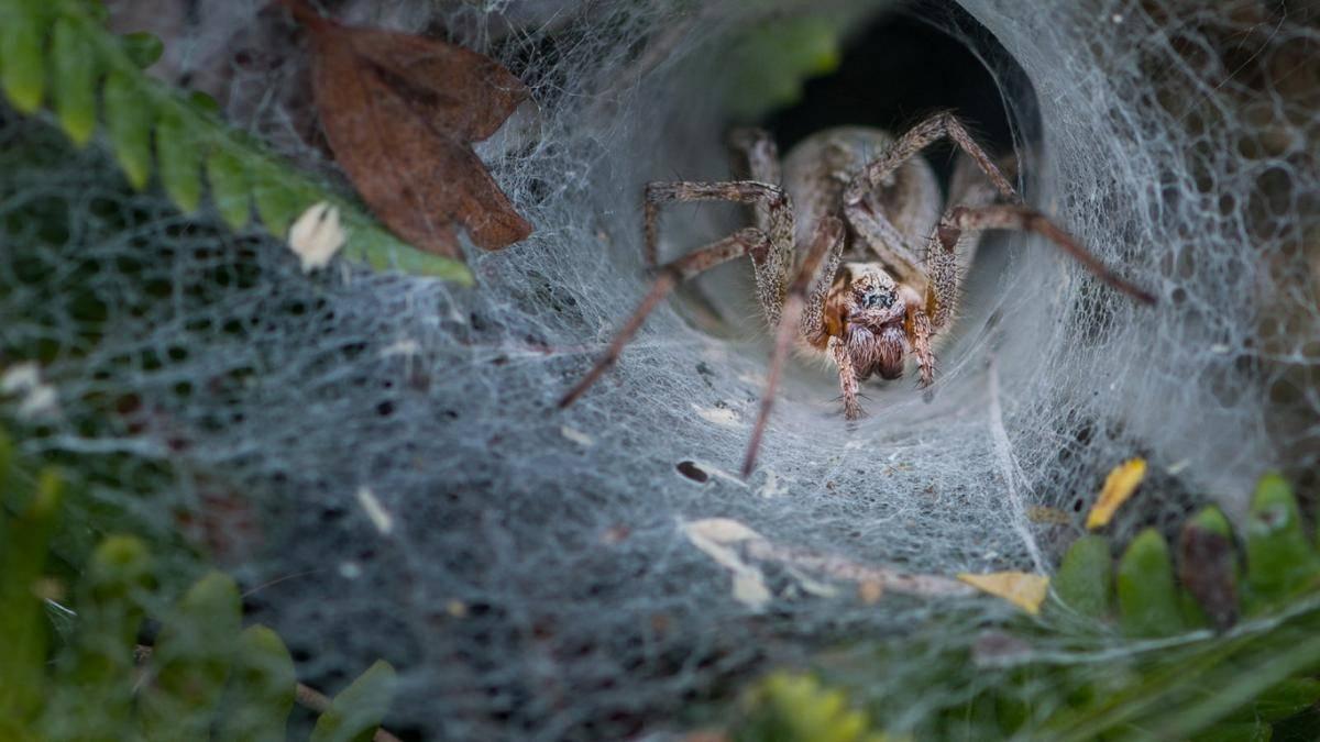 Сколько у паука ног википедия