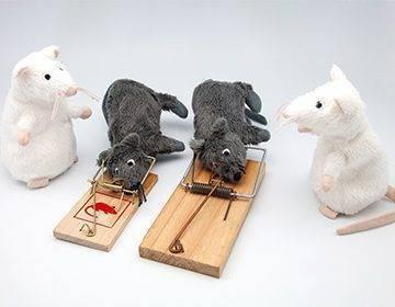 Изготовление ловушек для мышей своими руками