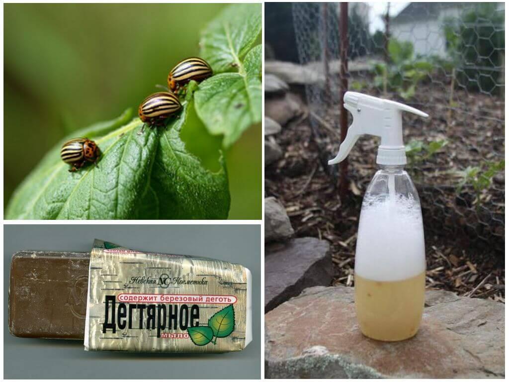 Березовый деготь против колорадского жука: способы применения