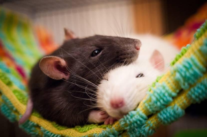 Классификация типов компьютерных мышек