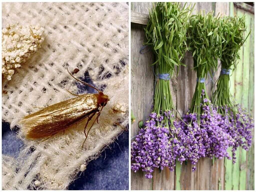 Растительноядная моль – гроза вашего сада и огорода