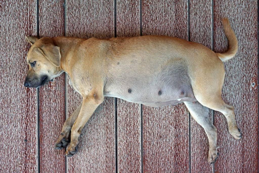 Средства от блох у собак: как выбрать и не навредить