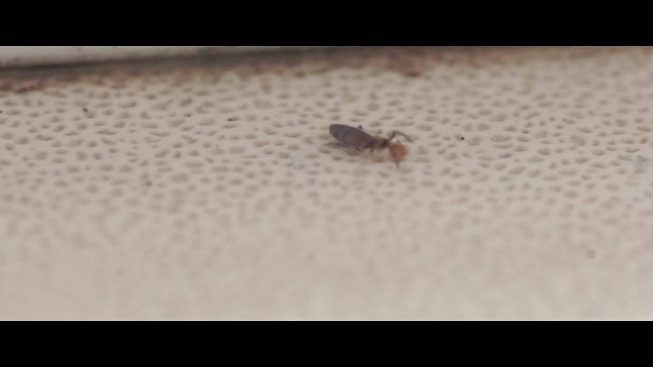 Земляные осы (фото) – эффективные методы уничтожения