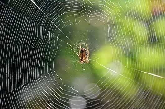 К чему снится паутина: толкование по сонникам для мужчин и женщин