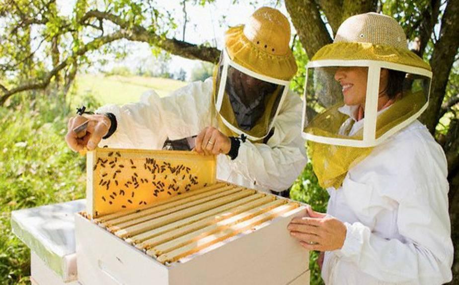 Развитие клеща варроа у пчел и метод борьбы с ним