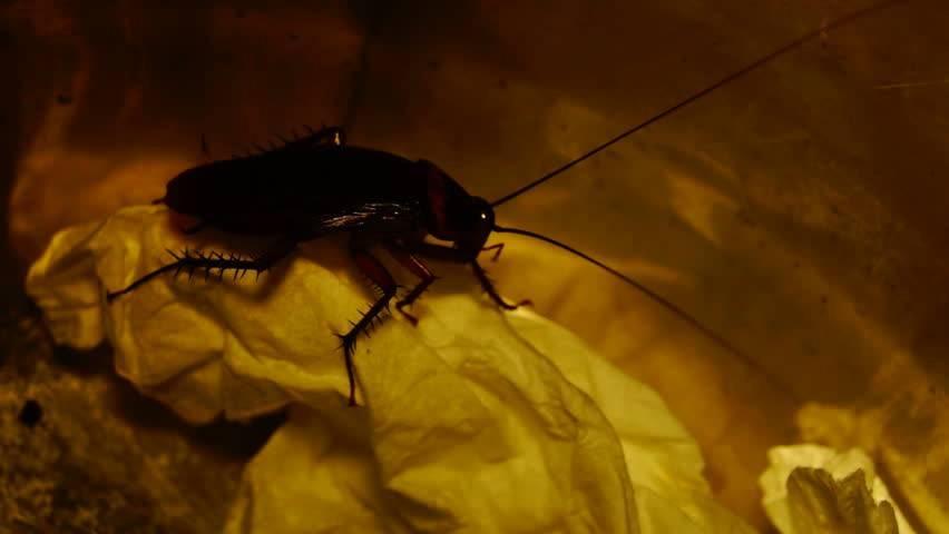 Как найти гнездо тараканов?