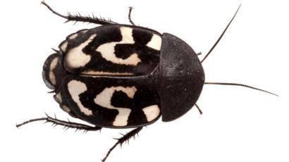 Чего больше всего опасаются тараканы