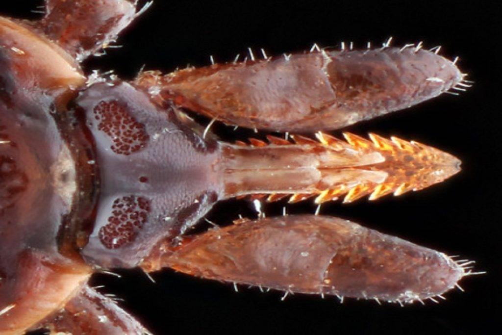 Для чего нужны клещи в природе? или, они природная ошибка? удивительно, но от этих насекомых много пользы!!!