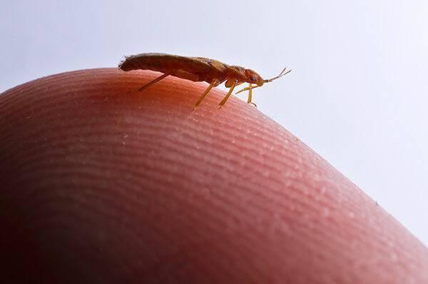 Заговоры от тараканов