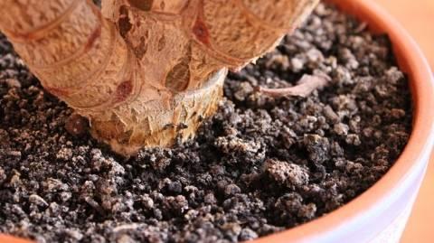 Как избавиться от плесени в цветочных горшках?