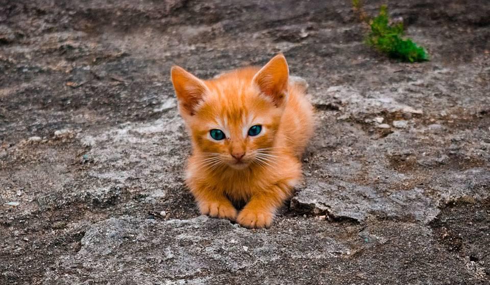 Блохи у кота – что делать и как вывести?