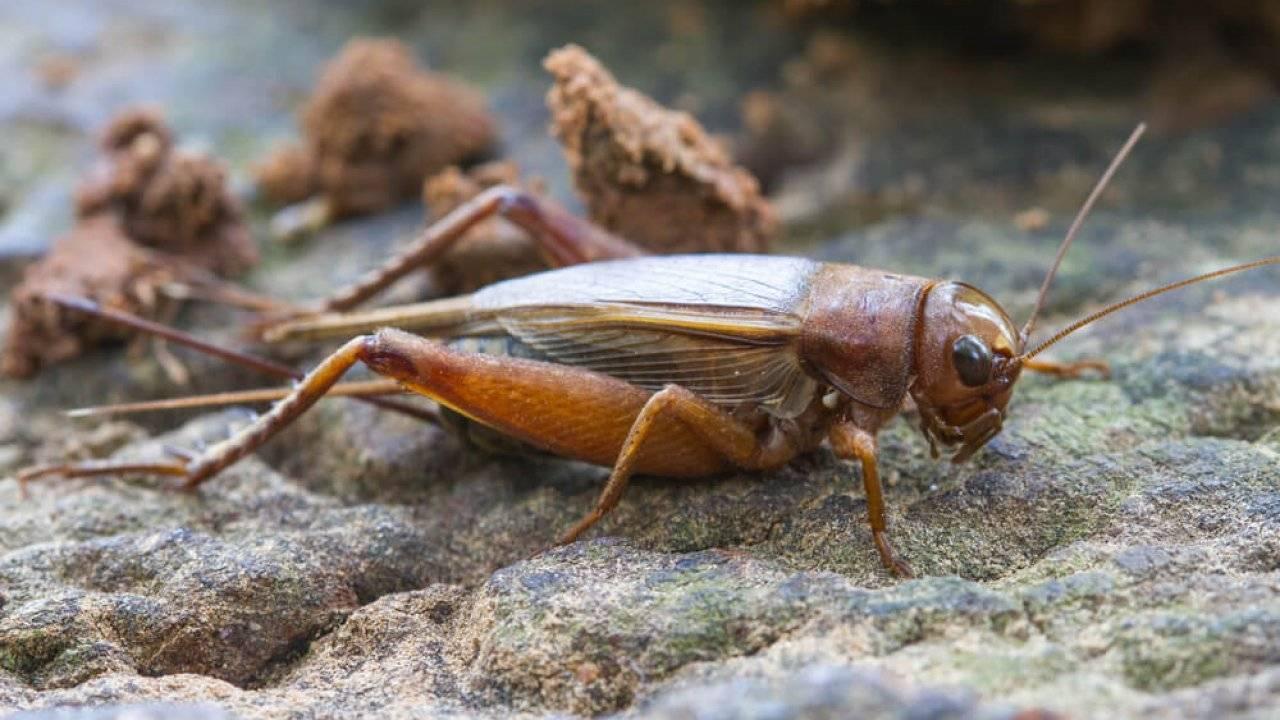 Топ-10 самых маленьких насекомых в мире