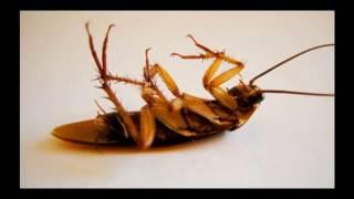 Эффективность средств комбат от тараканов