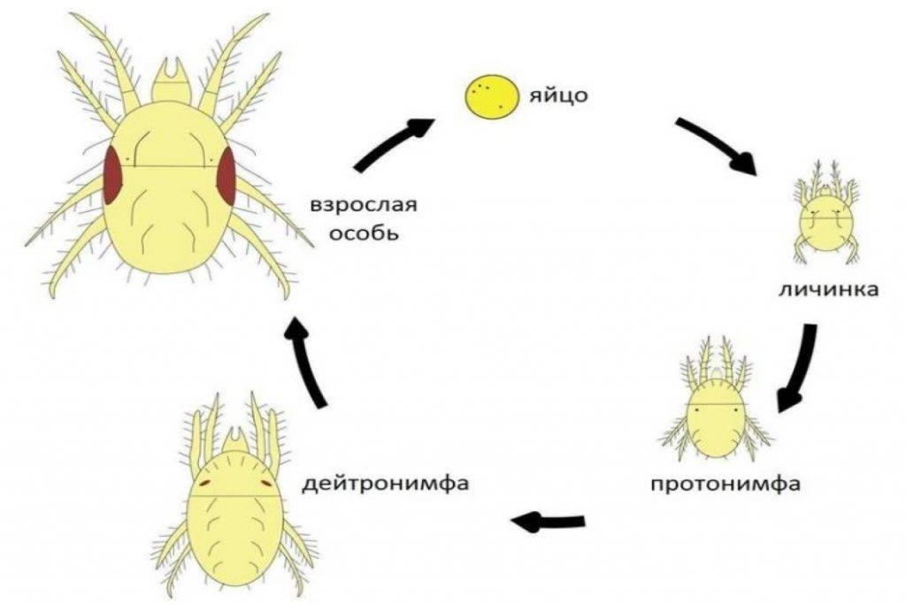 Акарициды против клещей: список препаратов и их описание
