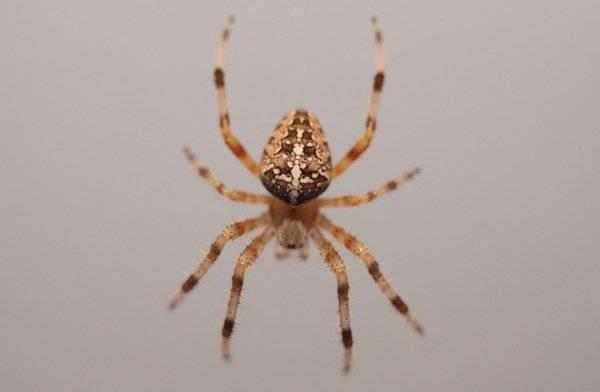 Паук относится к животным или насекомым