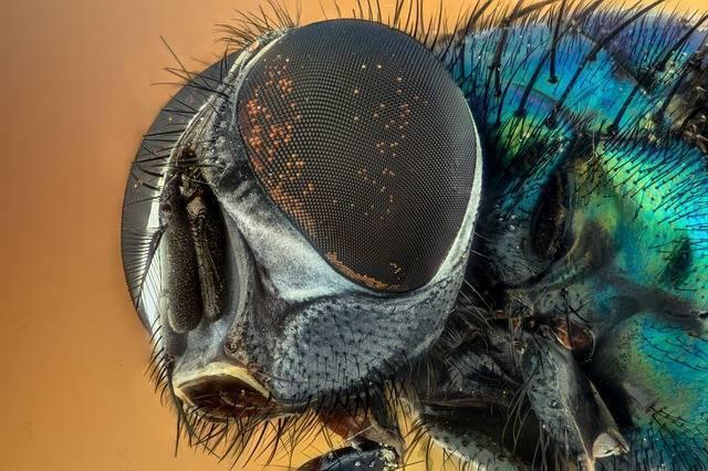 18 способов быстро избавиться от мух в доме