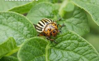 Препарат престиж для картофеля – как применять от колорадского жука