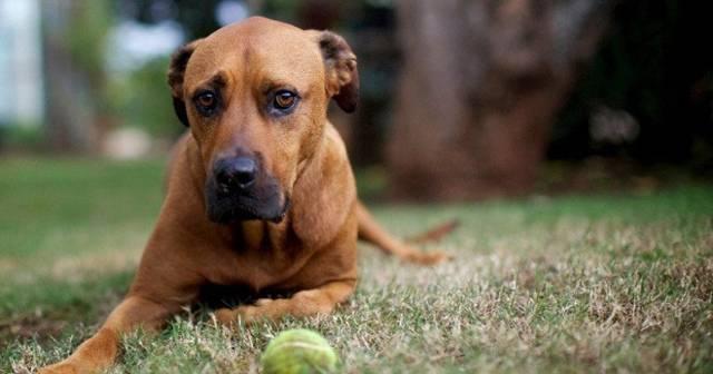Какие болезни от клещей бывают у собак? описание передающихся и их признаки
