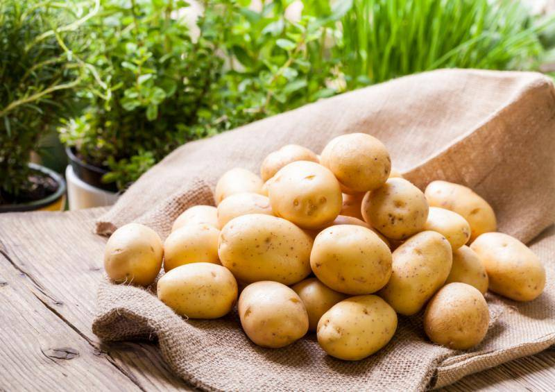 Список главных вредителей картофеля и способы борьбы с ними