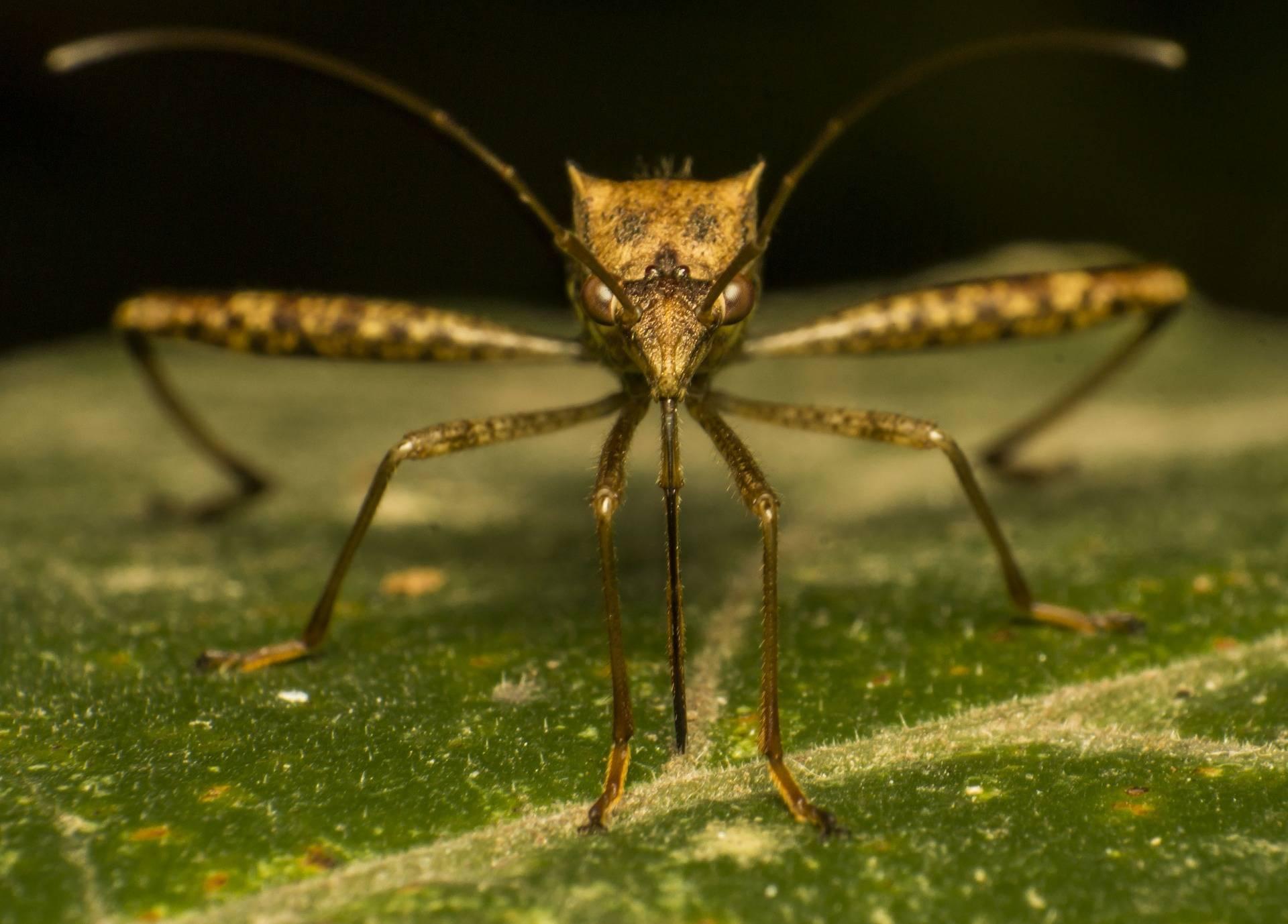 Чем помазать укусы комаров, чтобы не чесались и заживали