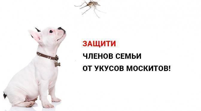 Что можно собакам намазать от мошек. что делать, если собаку покусали комары и мошки. защита народными средствами