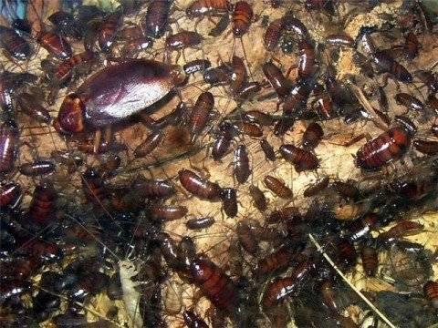 5 эффективных способов как избавиться от тараканов в квартире