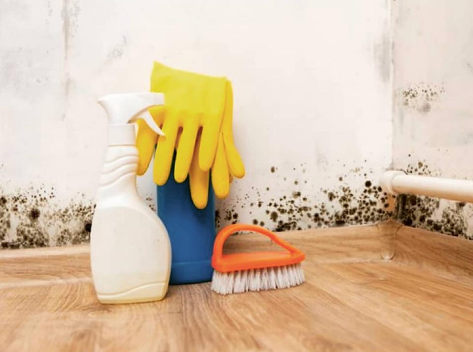 Плесень на стене в квартире: все способы решения проблемы