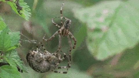 Пауки — виды и описание