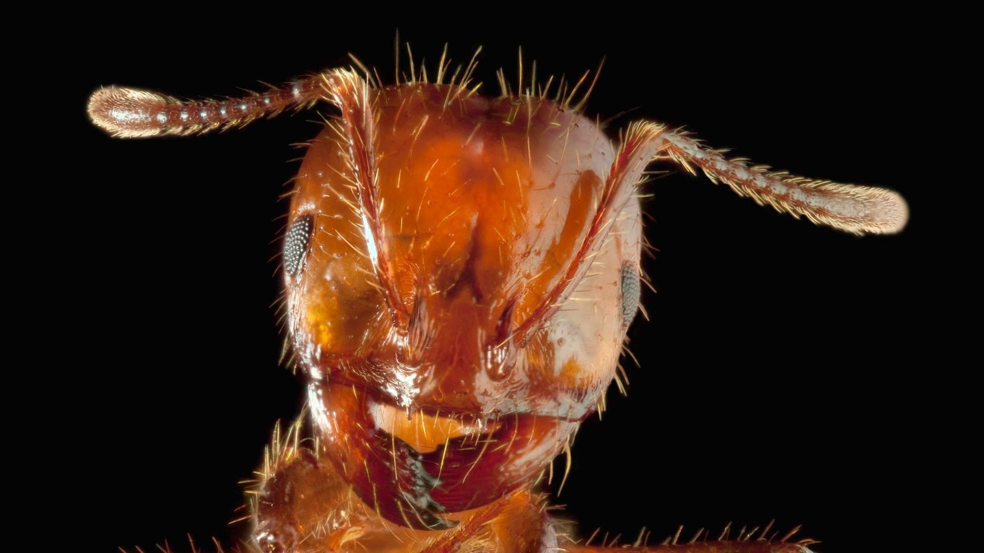 Муравьи. самые интересные факты об этих насекомых