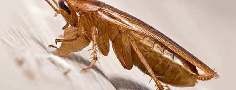 Аквафумигатор станет надёжным помощником в борьбе с тараканами и клопами