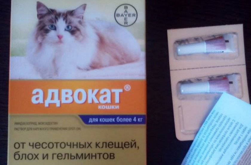"""Капли от блох для кошек адвокат. капли """"адвокат"""" для собак: инструкция по применению и отзывы адвокат для кошек отзывы ветеринаров"""
