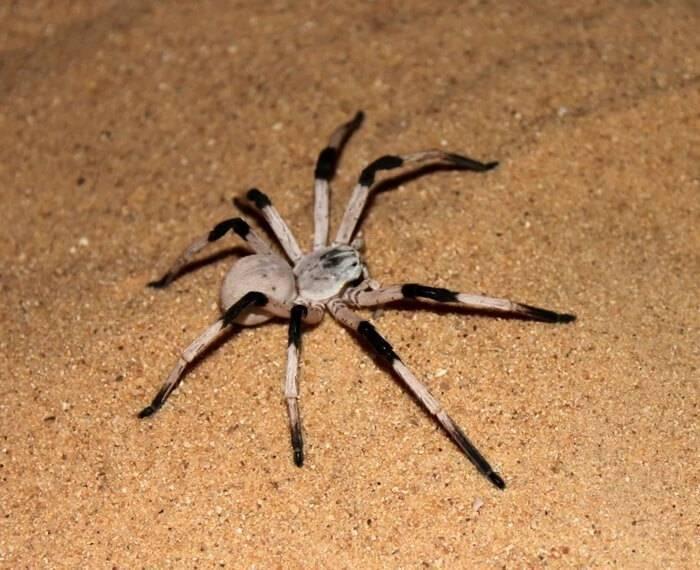 Топ-10 самых опасных, больших и ядовитых пауков в мире