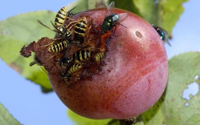 Укусы насекомых: чем опасны и как защититься от них