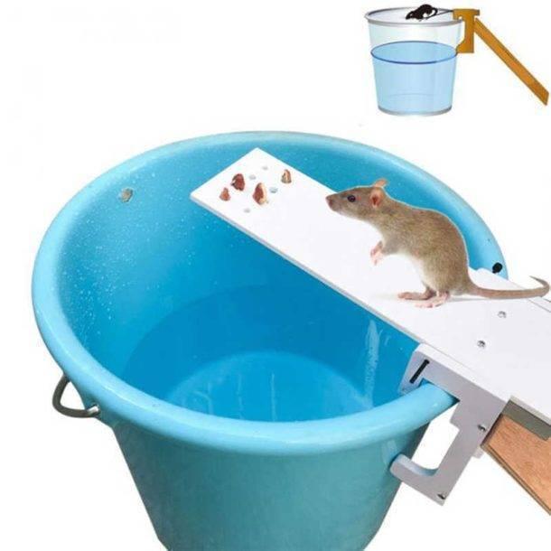 Как изготовить самодельные ловушки для крыс – крысоловки, живоловки, капканы, электроловушки