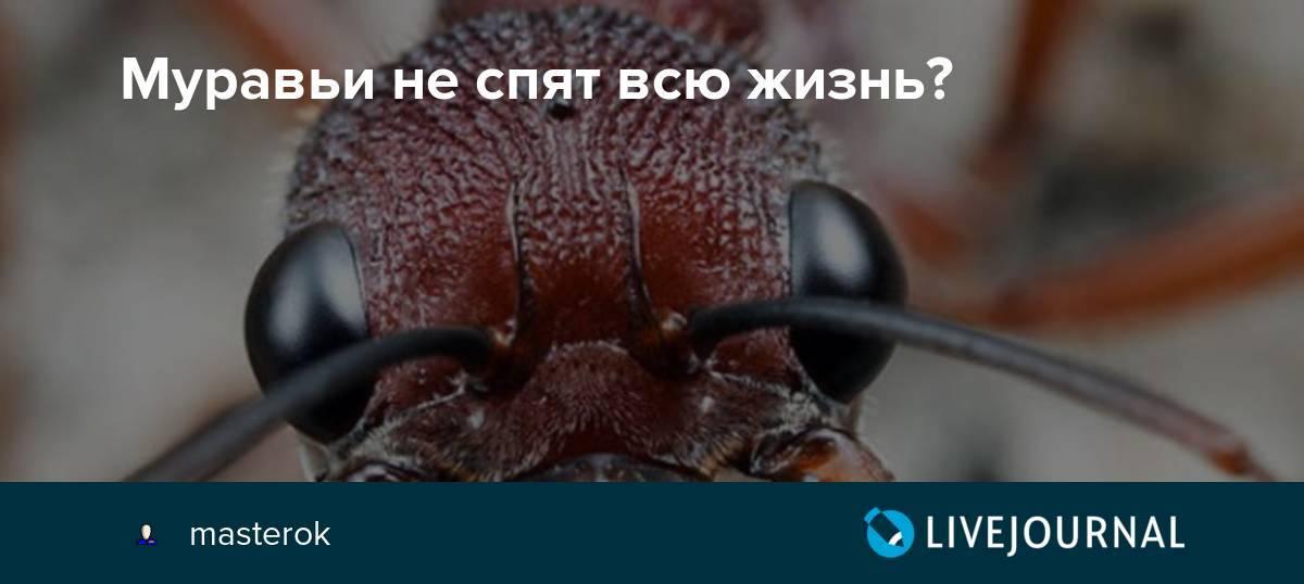 Спят ли муравьи — правда об отдыхе насекомых