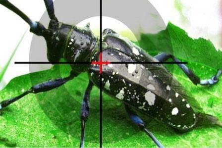 Чего бояться тараканы – температура, запахи и борная кислота