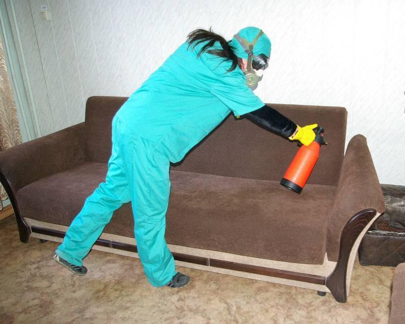 5 средств профессиональной дезинфекции от клопов в квартире