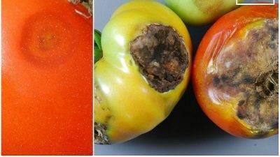 Методы борьбы с гусеницами на садовом участке — лучшие народные средства