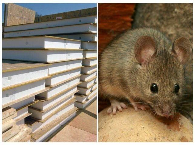 Мыши под полом: обзор способов избавления от ненавистных грызунов